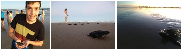 projeto tamar soltura das tartarugas
