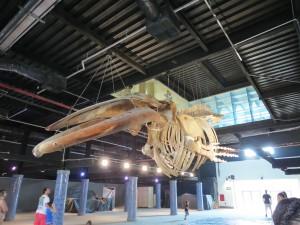 baleia-aquario