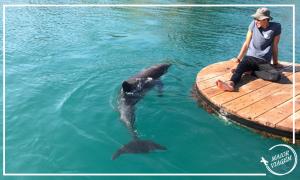 dolphin-reef-eilat
