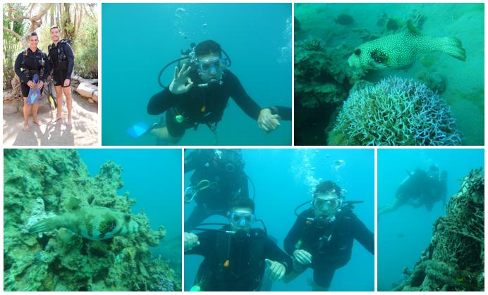 dolphin-reef-fotos-mergulho