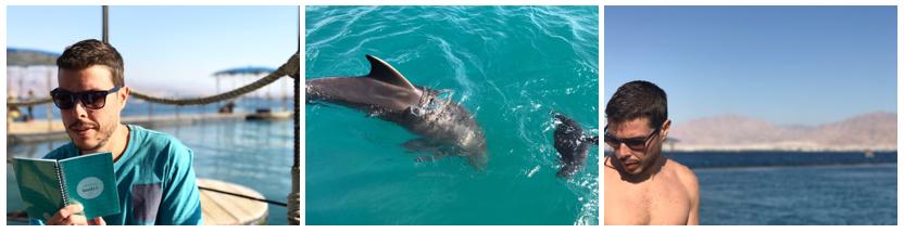 dolphin-reef-fotos-otavio