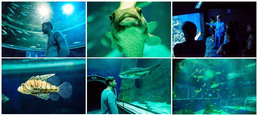 aquario-fotos