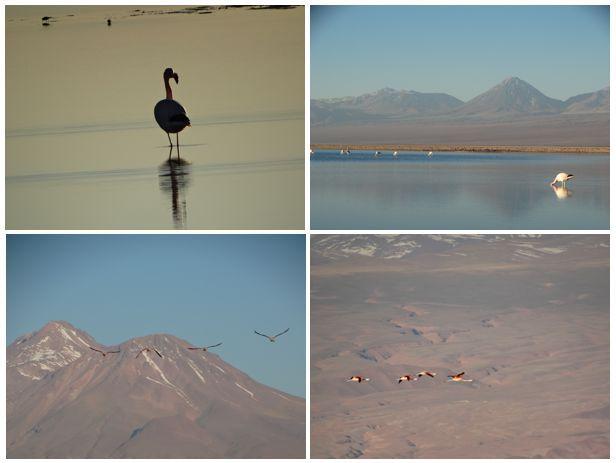 parque-dos-flamingos-atacama
