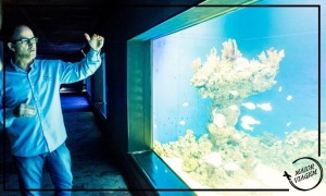 visitando-o-aquario