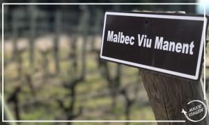 vinicola-viu-manent