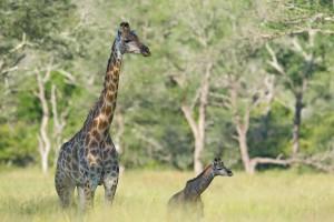 safari-na-africa-do-sul