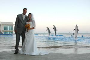 Copyright Marineland DCC - dolphin jump at wedding